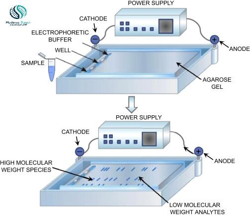 What is Agarose gel electrophoresis?