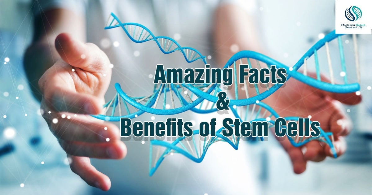Interesting facts about stem cells
